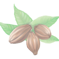 cacao-2-500x400